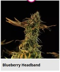 blueberry headband