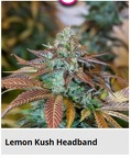 lemon kush headband