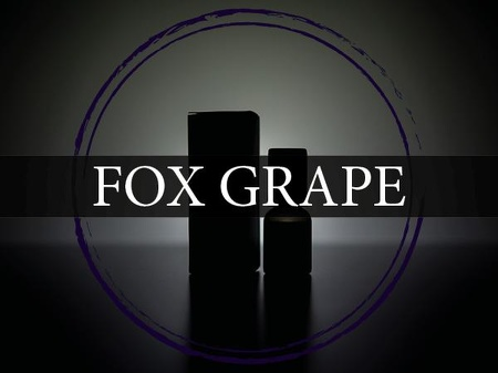 fox grape