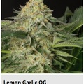 lemon garlic og