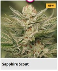 sapphire scout