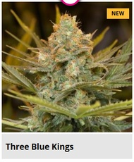 three blue kings