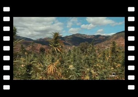 Marijuana in Morocco by Dinafem Seeds