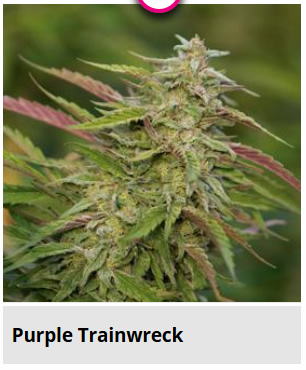 purple_trainwreck.jpg