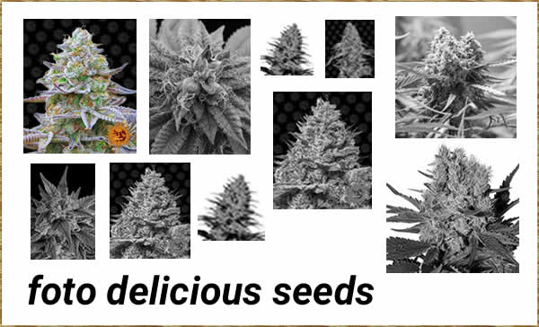 foto delicious seeds